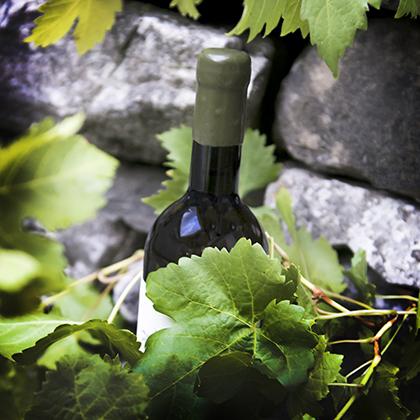 Our Vegan Wine Range - Lekker Wines